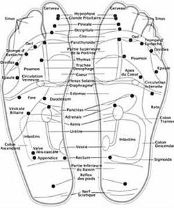 réflexologie plantaire - cartographie du pied